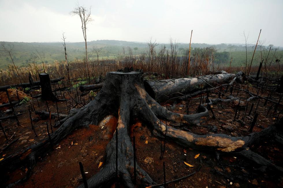 Thêm 2.000 đám cháy mới ở Amazon chỉ sau 2 ngày Brazil cấm đốt rừng - Ảnh 5.