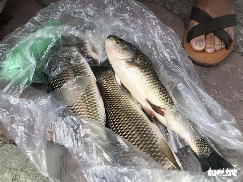 Sau mưa lớn, người dân đổ ra sông Tô Lịch câu cá - Ảnh 4.