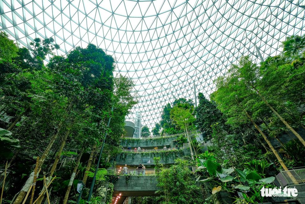 Lạc vào khu rừng bên trong sân bay Changi Singapore - Ảnh 6.