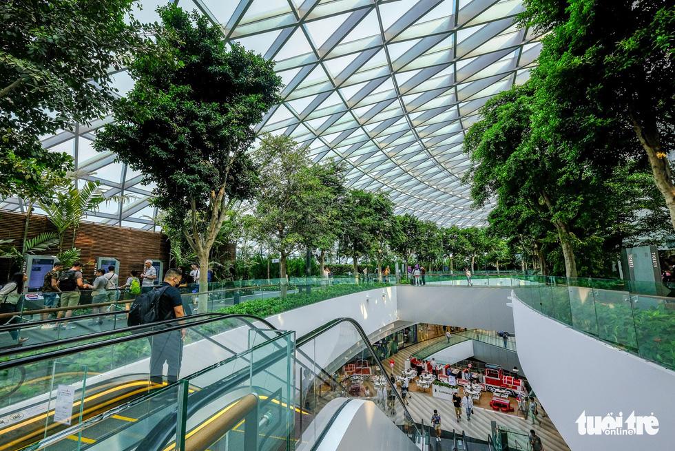 Lạc vào khu rừng bên trong sân bay Changi Singapore - Ảnh 4.