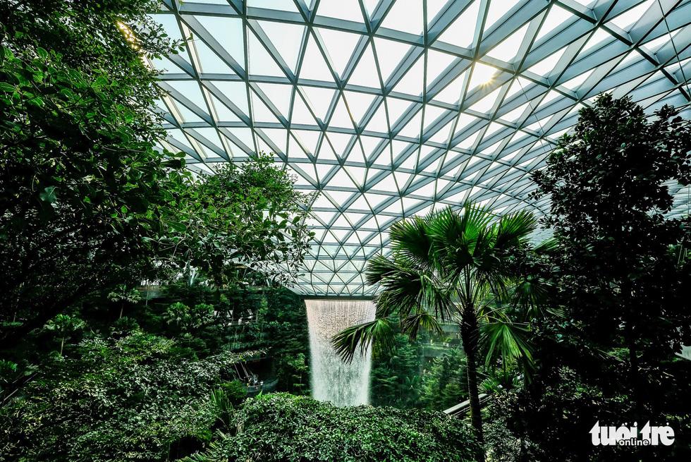 Lạc vào khu rừng bên trong sân bay Changi Singapore - Ảnh 3.