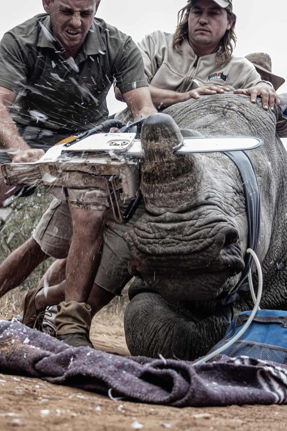 Thông điệp đáng lo sau bức ảnh Việt Nam tại cuộc thi ảnh môi trường thế giới - Ảnh 8.