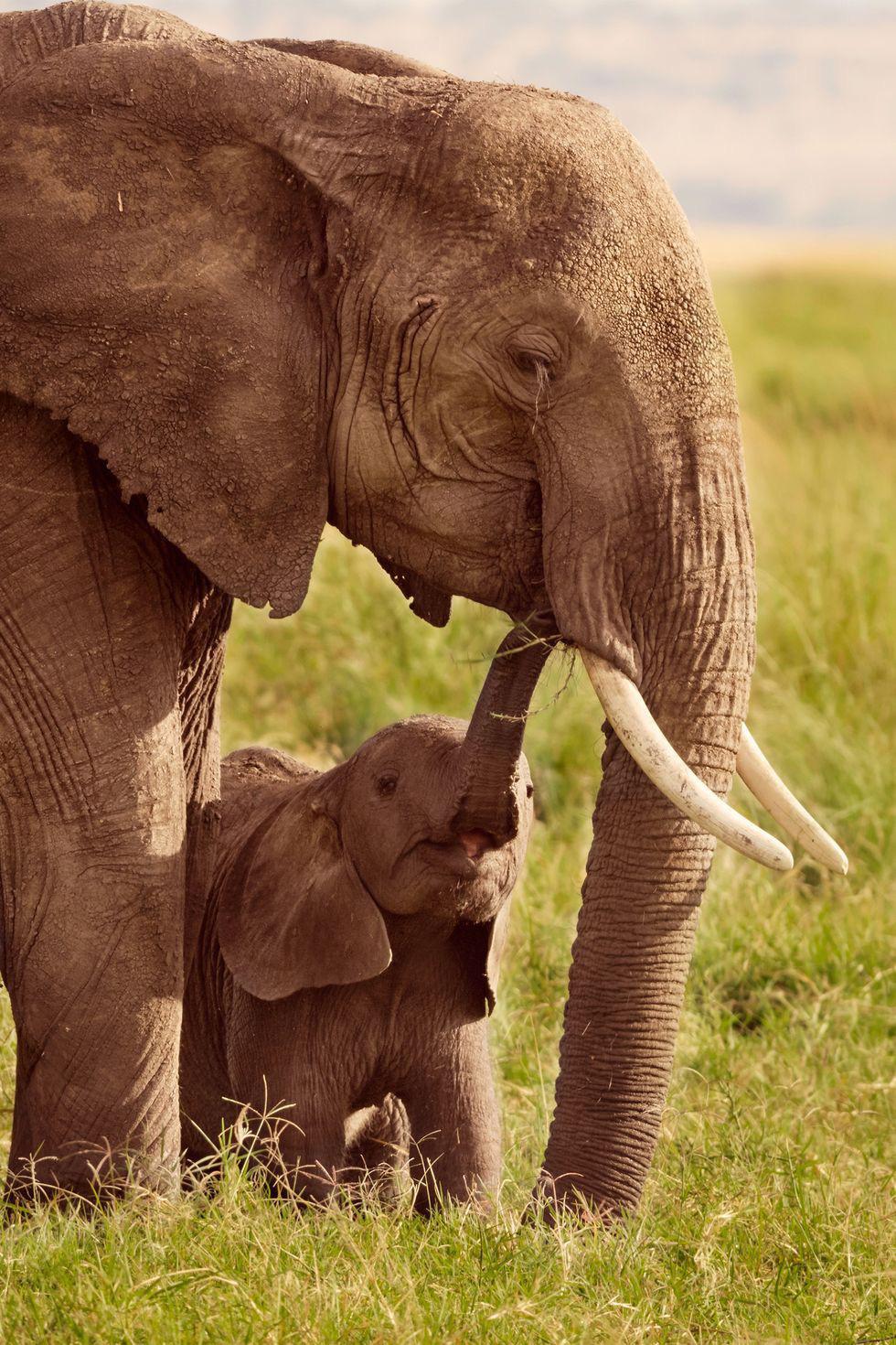 Khó tin: muỗi nguy hiểm nhất hành tinh, cú ly hôn và voi mang thai 2 năm - Ảnh 8.