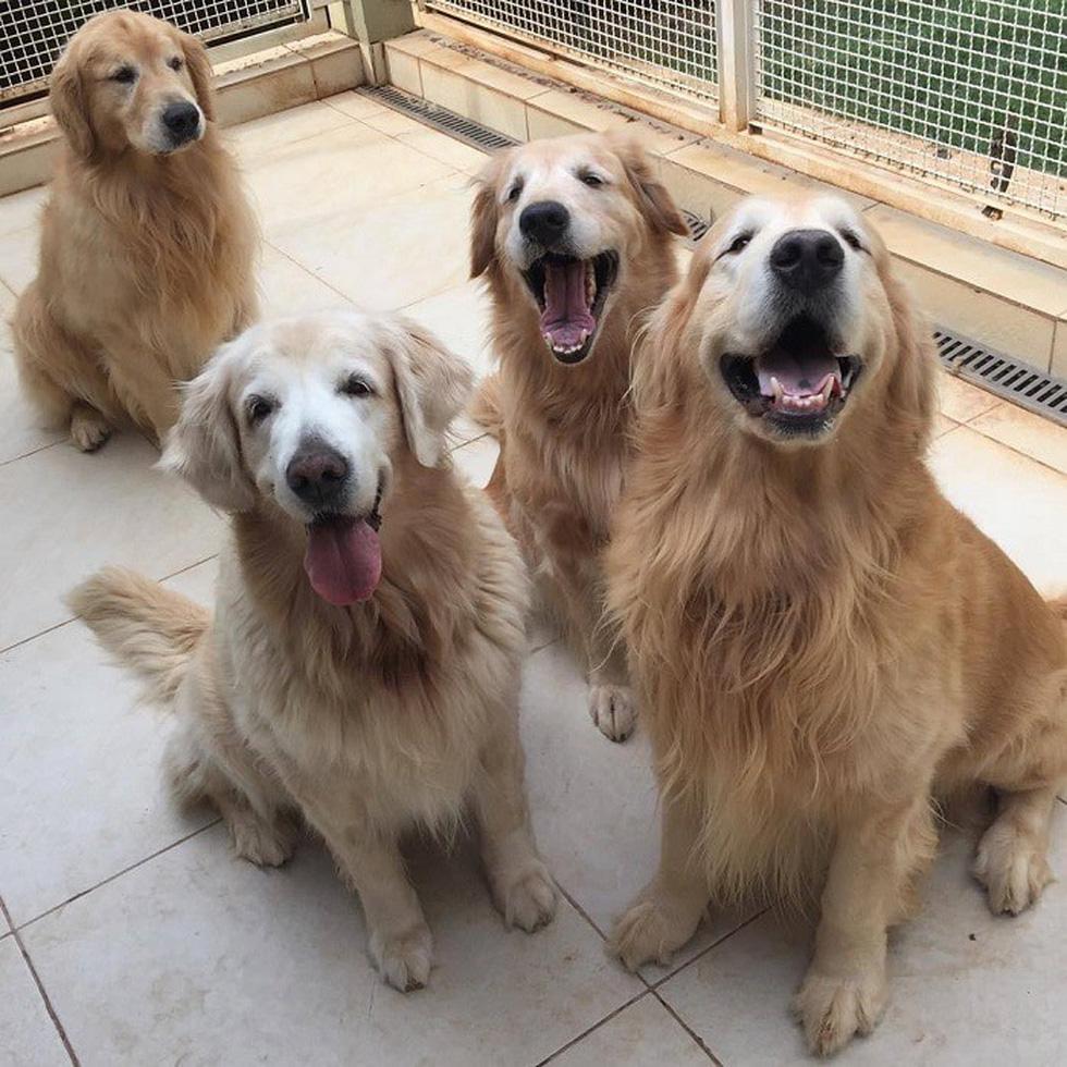Điểm mặt những giống chó siêu đắt, chi phí nuôi siêu cao trên thế giới - Ảnh 1.