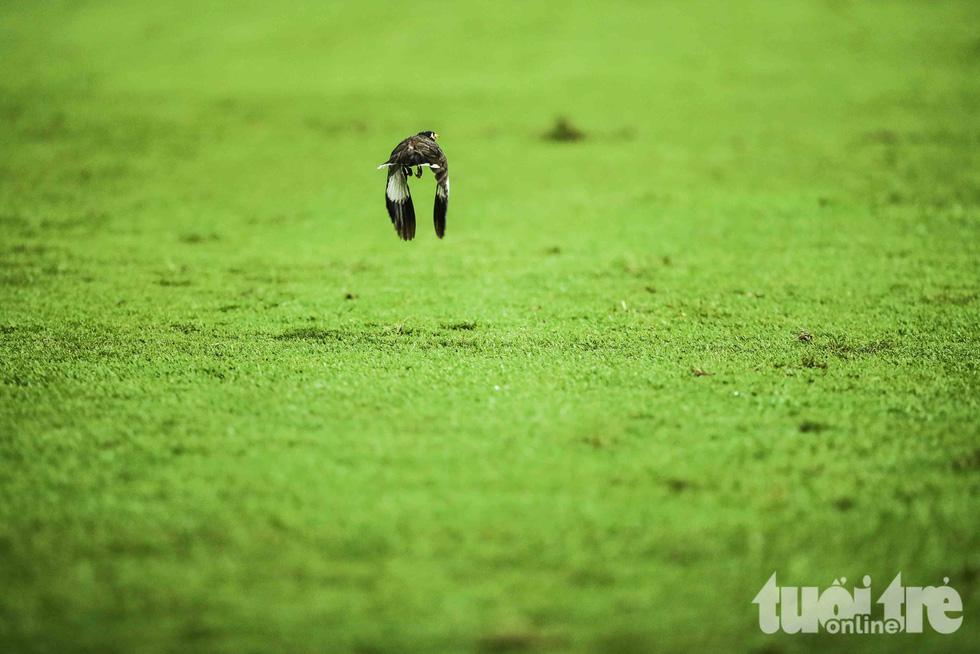 Thú vị với hinh ảnh đàn chim đi kiếm mồi giữa trận Thái Lan - Việt Nam - Ảnh 1.