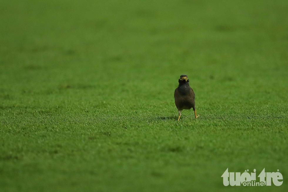 Thú vị với hinh ảnh đàn chim đi kiếm mồi giữa trận Thái Lan - Việt Nam - Ảnh 3.