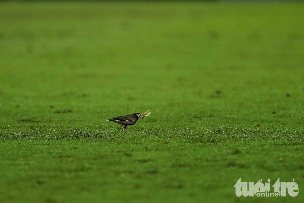Thú vị với hinh ảnh đàn chim đi kiếm mồi giữa trận Thái Lan - Việt Nam - Ảnh 5.