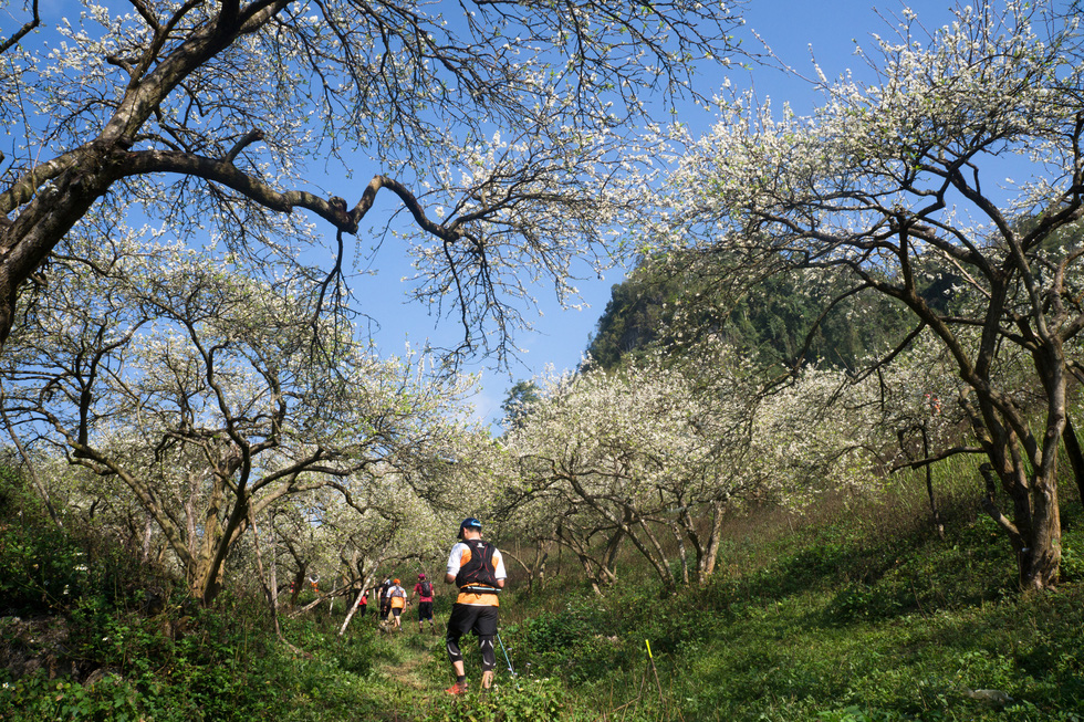 Lạc bước thiên đường trắng Mộc Châu mùa hoa mận nở - Ảnh 1.