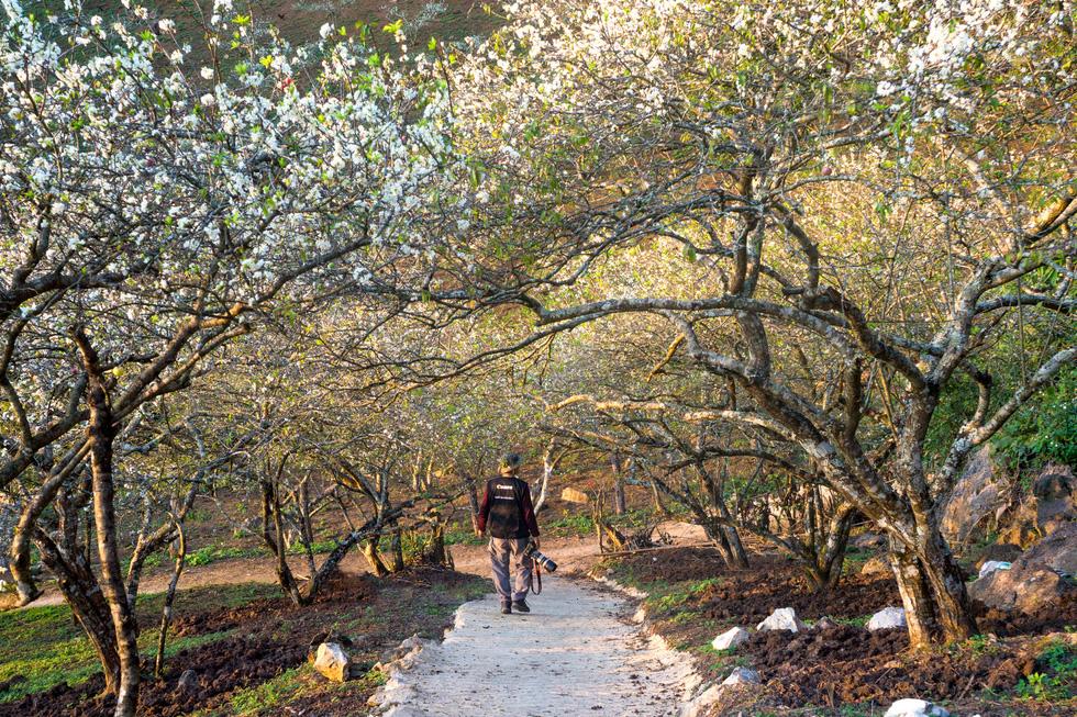 Lạc bước thiên đường trắng Mộc Châu mùa hoa mận nở - Ảnh 2.