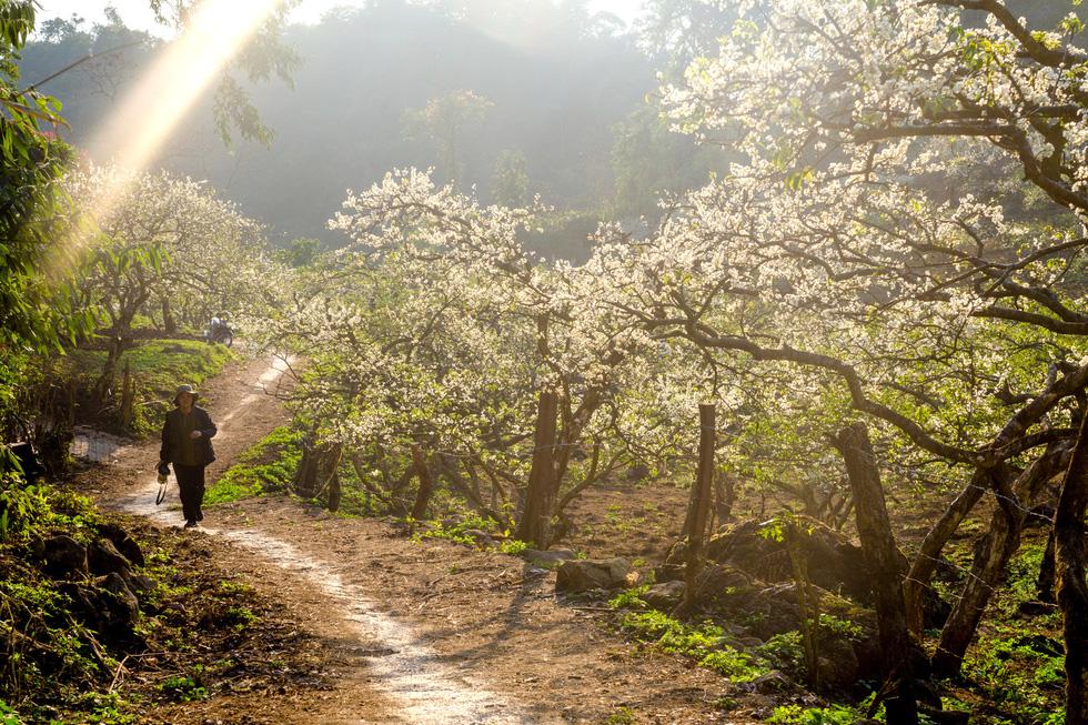 Lạc bước thiên đường trắng Mộc Châu mùa hoa mận nở - Ảnh 6.
