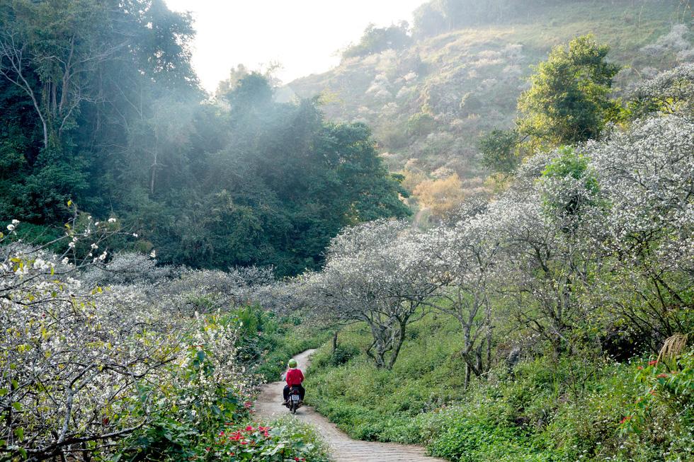 Lạc bước thiên đường trắng Mộc Châu mùa hoa mận nở - Ảnh 9.