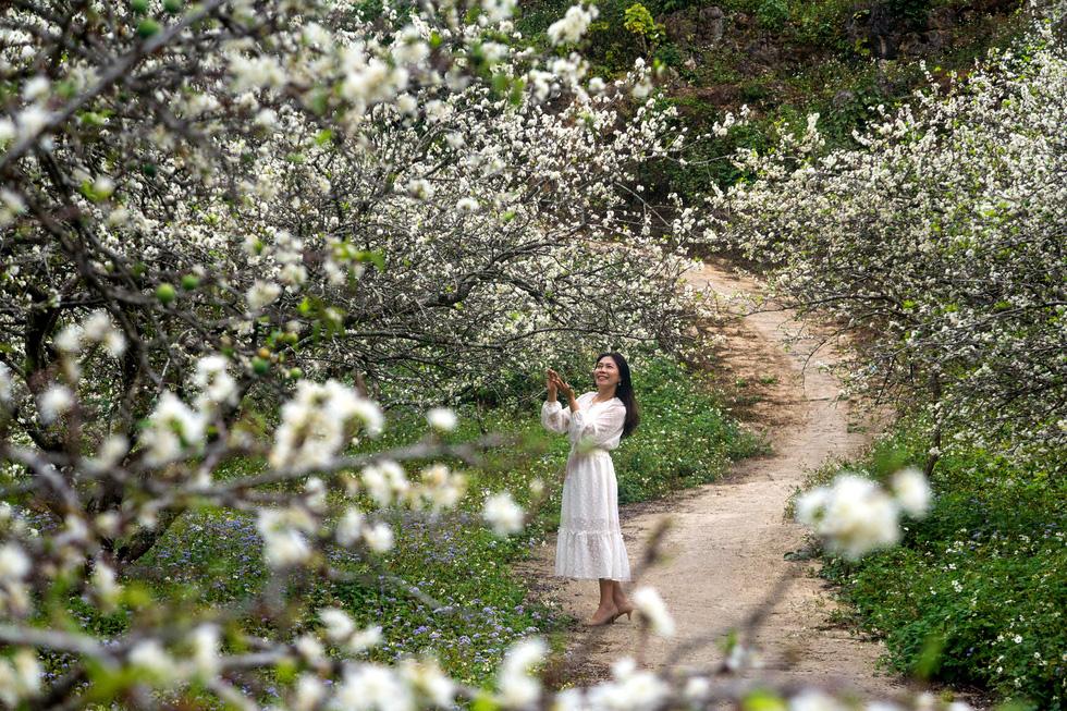 Lạc bước thiên đường trắng Mộc Châu mùa hoa mận nở - Ảnh 11.