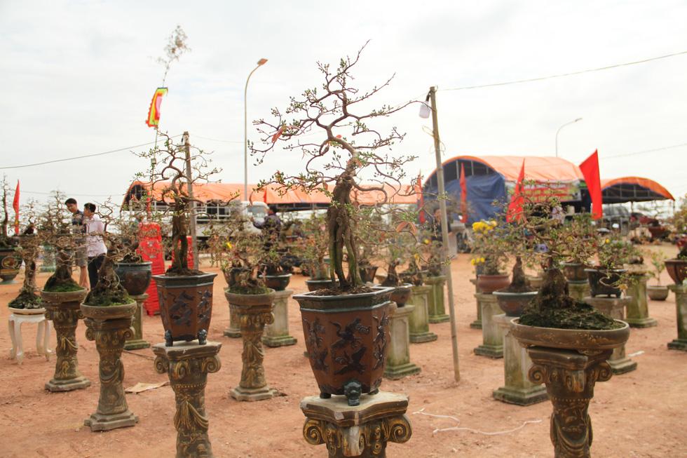 Chiêm ngưỡng đại lão mai Nét xưa Bình Định, Khủng long bạo chúa, Vũ nữ chân dài - Ảnh 8.