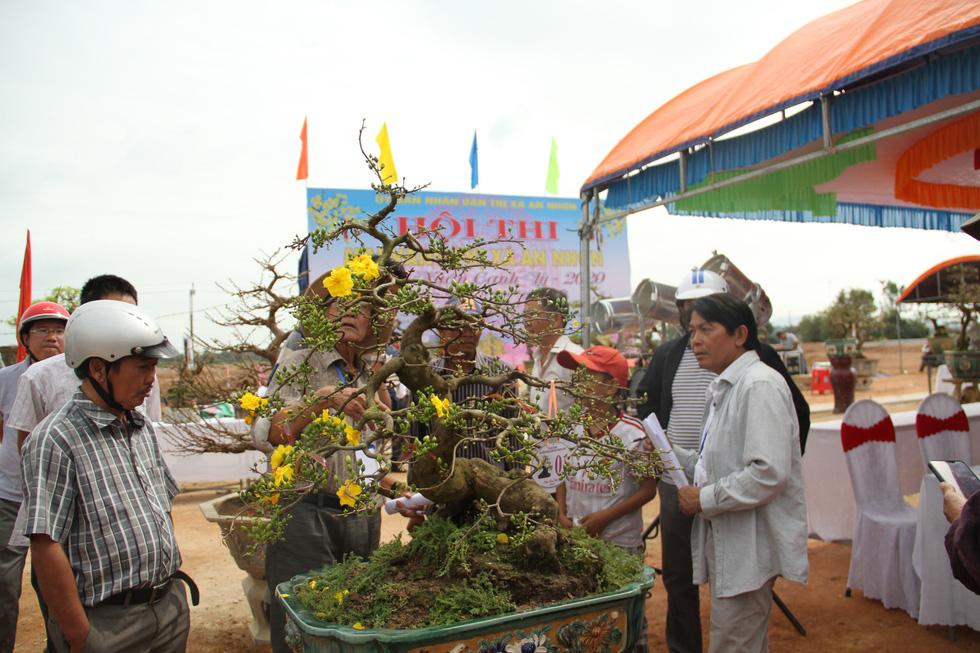 Chiêm ngưỡng đại lão mai Nét xưa Bình Định, Khủng long bạo chúa, Vũ nữ chân dài - Ảnh 6.