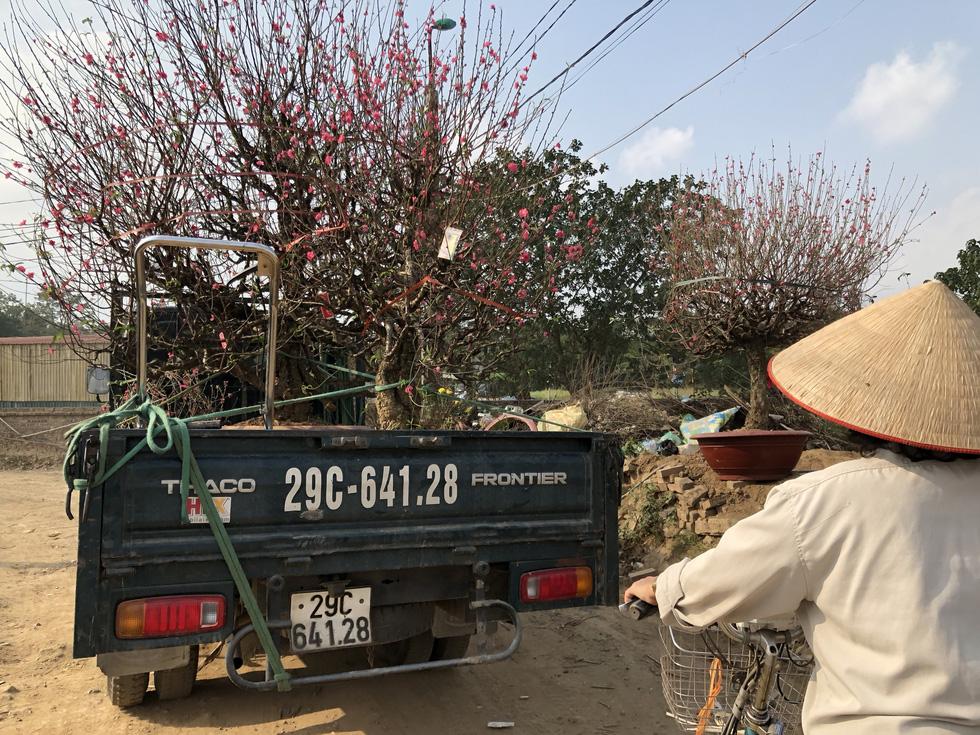 Nắng ấm đào bung khoe hết sắc, người trồng khóc vì lỗ vốn - Ảnh 7.