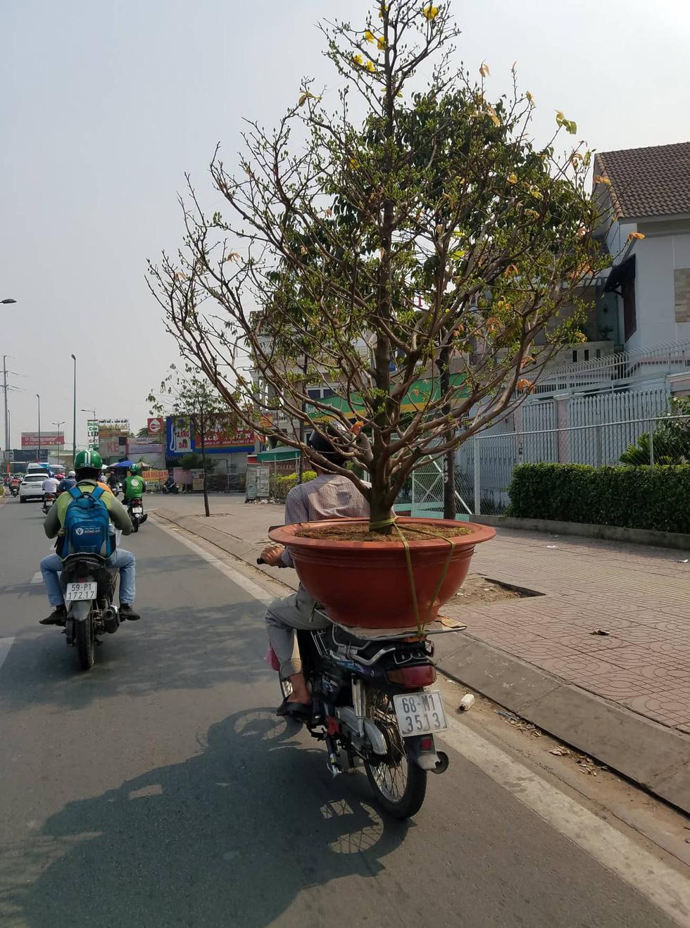 Mai tết Sài Gòn bay đi Hà Nội, Campuchia - Ảnh 4.