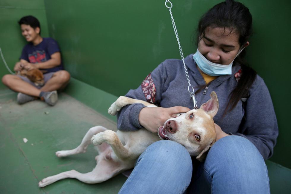 Thú cưng, gia súc, gia cầm được giải cứu và di tản vì tro núi lửa ở Philippines - Ảnh 5.