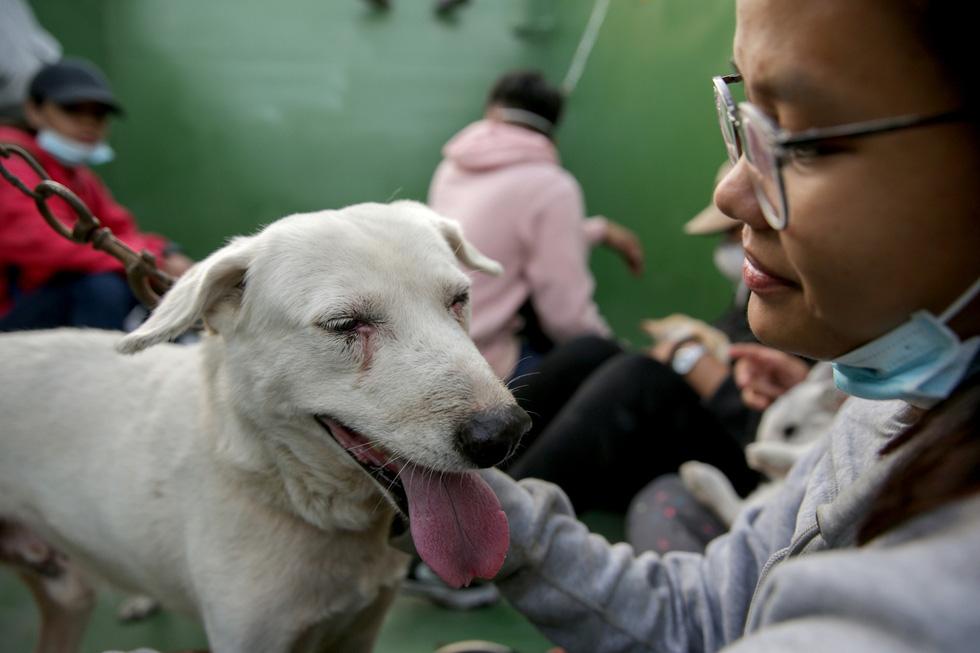 Thú cưng, gia súc, gia cầm được giải cứu và di tản vì tro núi lửa ở Philippines - Ảnh 3.