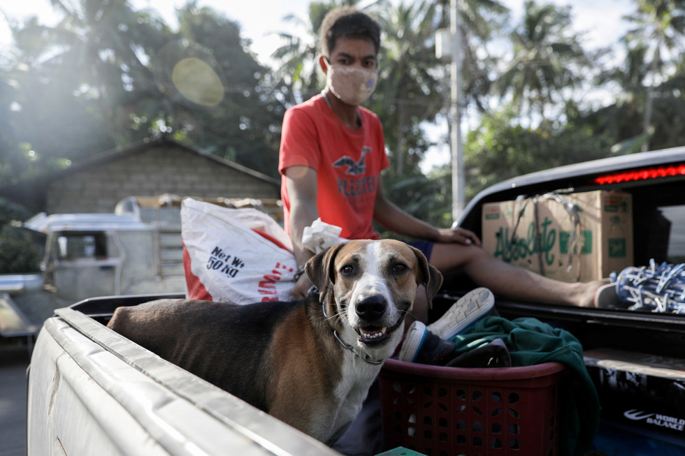 Thú cưng, gia súc, gia cầm được giải cứu và di tản vì tro núi lửa ở Philippines - Ảnh 1.