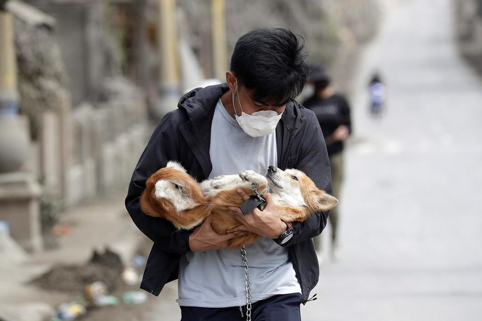 Thú cưng, gia súc, gia cầm được giải cứu và di tản vì tro núi lửa ở Philippines - Ảnh 2.
