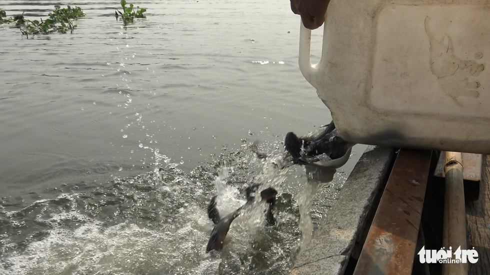 Cá chép đưa ông Táo vừa thả xuống sông đã bị chích điện bất tỉnh - Ảnh 8.
