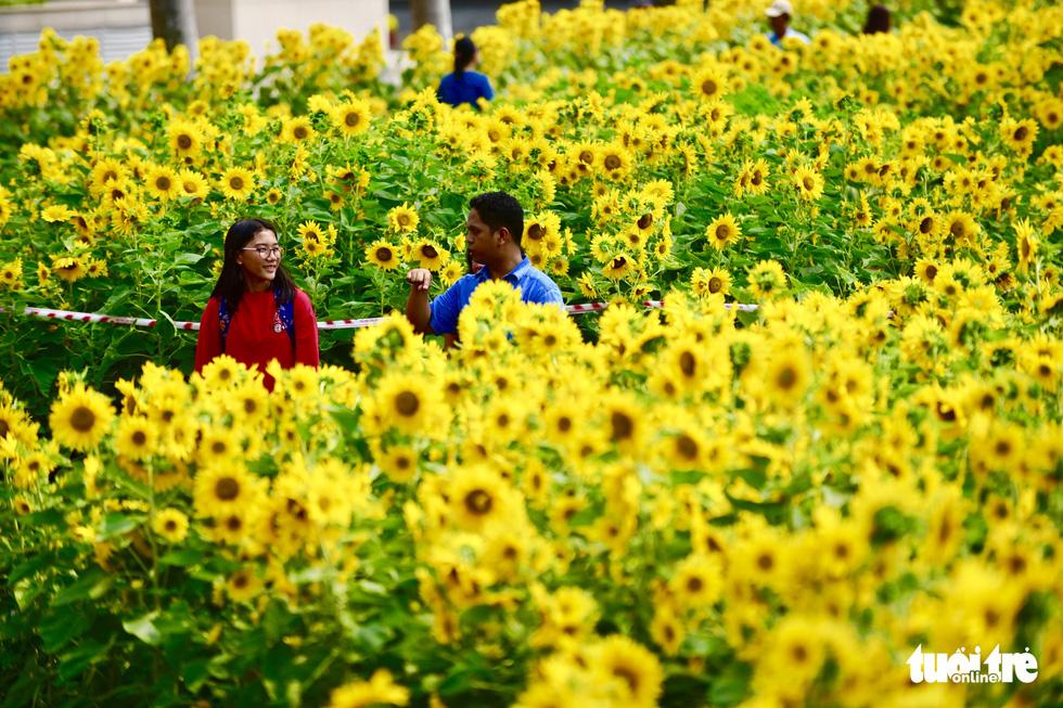 Cận cảnh đường hoa rước lộc đồng hoa Phú Mỹ Hưng Tết Canh Tý - Ảnh 10.