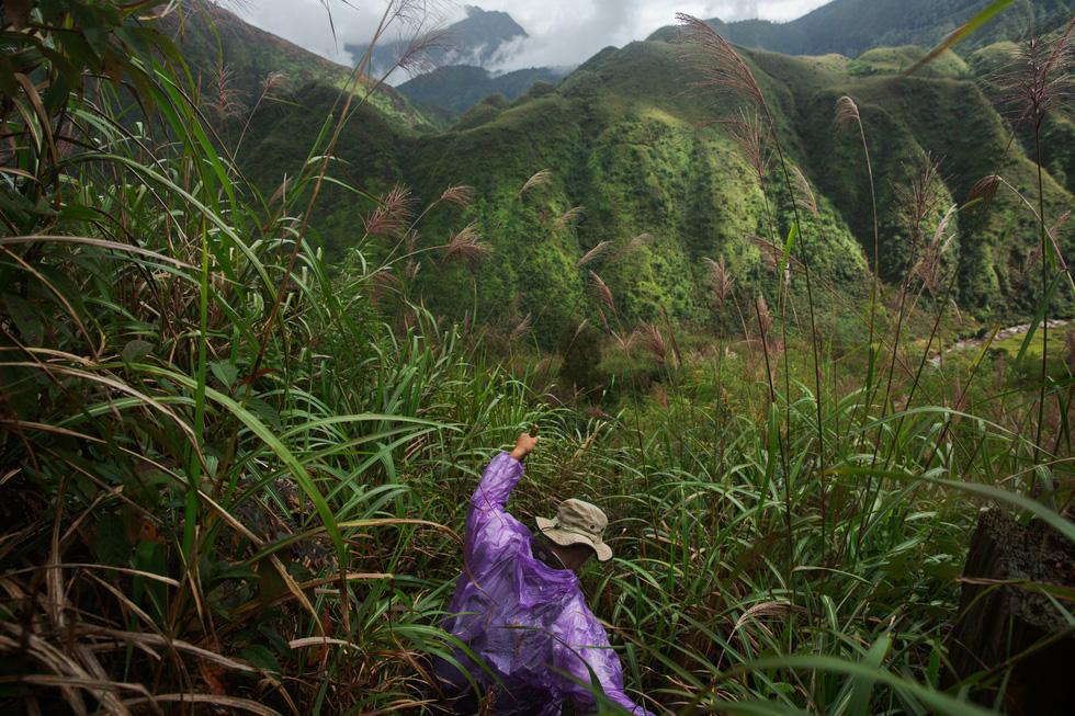 Chuyến thu hoạch thảo quả ở vườn quốc gia Hoàng Liên lên NatGeo - Ảnh 4.