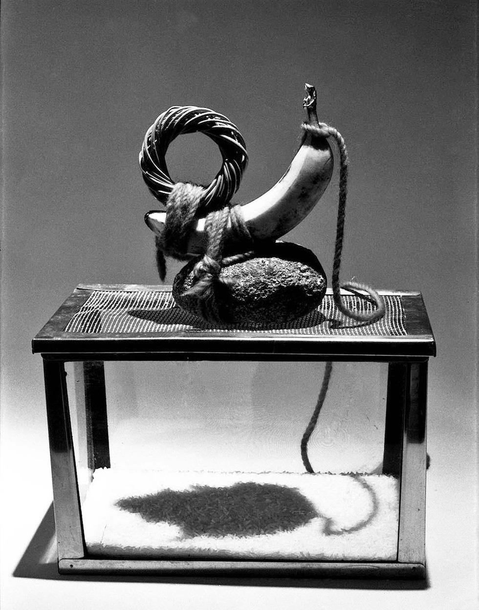Chuột: Minh họa cho huyền thoại, lòng tin và cả ảo tưởng của chúng ta - Ảnh 4.