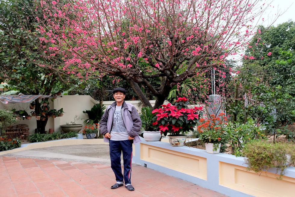 Ngắm cây đào siêu to khổng lồ ở Bắc Giang nở đầy hoa đỏ rực - Ảnh 2.