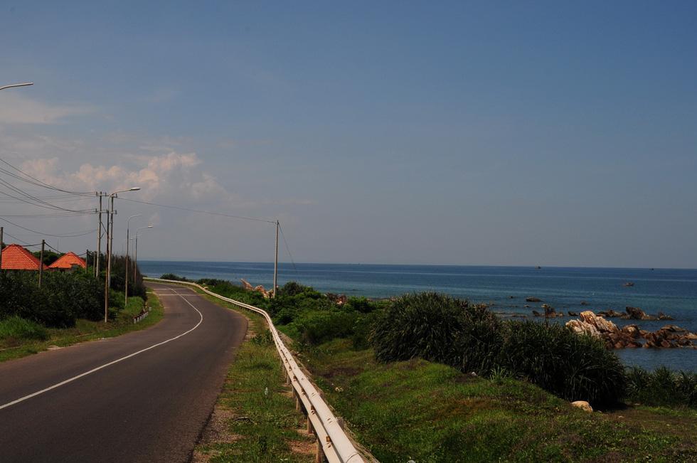 Cung đường biển Nam Trung Bộ rực sắc hoa tràm vàng - Ảnh 4.