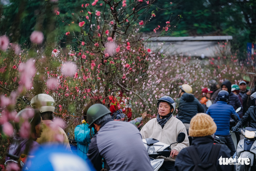 Chuột vàng 'cõng' đào Nhật Tân hút khách ngày cận tết - Ảnh 1.