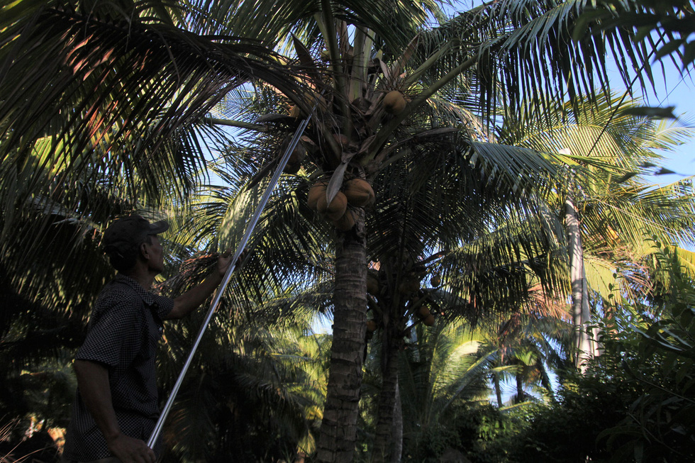 Đặt chuột dừa thu nhập tiền triệu mỗi ngày - Ảnh 2.