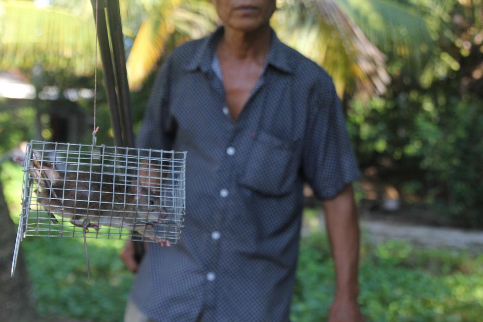 Đặt chuột dừa thu nhập tiền triệu mỗi ngày - Ảnh 5.