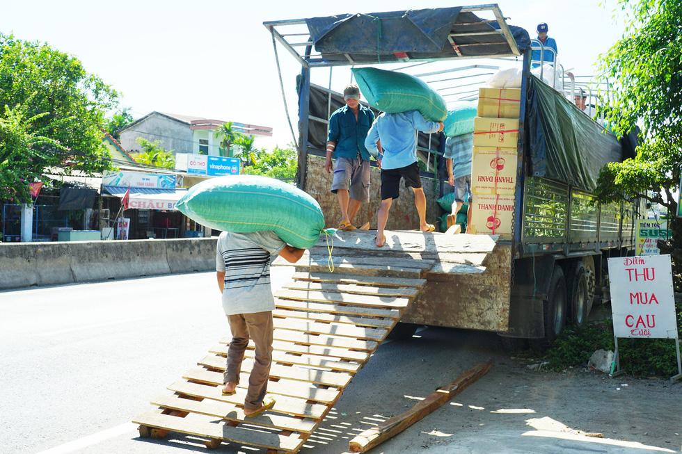 Nhộn nhịp mùa cau ở Tiên Phước, Quảng Nam - Ảnh 7.