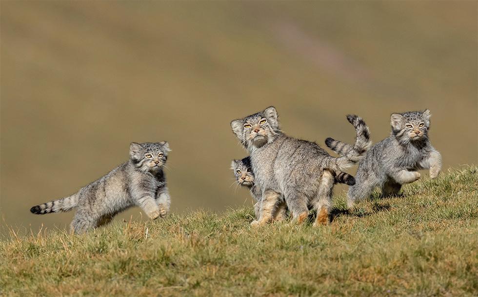 Hổ Siberia ôm cây đoạt giải ảnh động vật hoang dã năm 2020 - Ảnh 8.