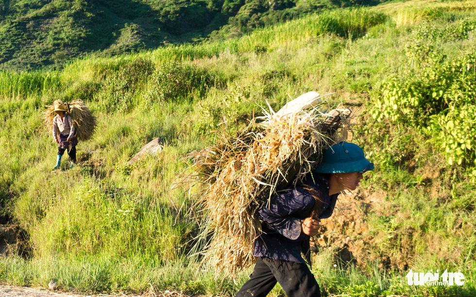 Mùa gặt hạt vàng ở ruộng bậc thang Y Tý - Ảnh 3.