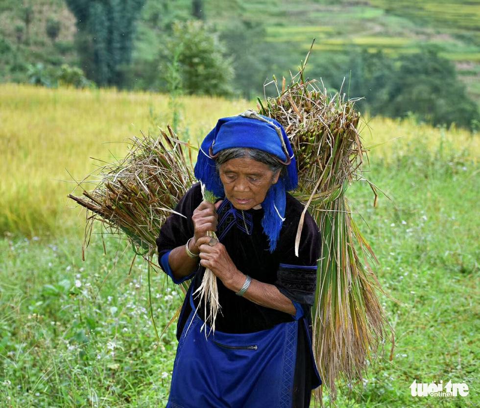 Mùa gặt hạt vàng ở ruộng bậc thang Y Tý - Ảnh 5.