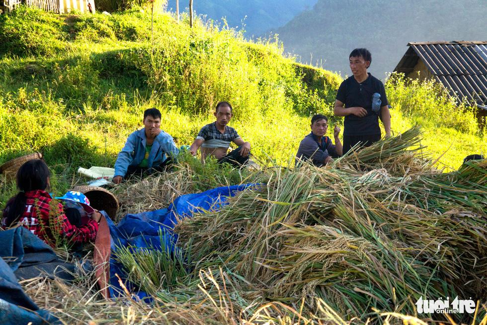 Mùa gặt hạt vàng ở ruộng bậc thang Y Tý - Ảnh 6.