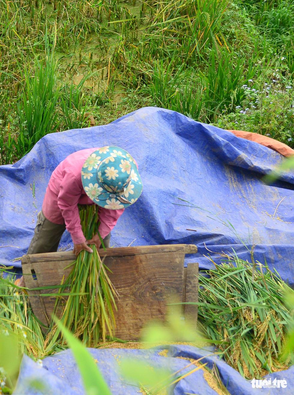 Mùa gặt hạt vàng ở ruộng bậc thang Y Tý - Ảnh 4.