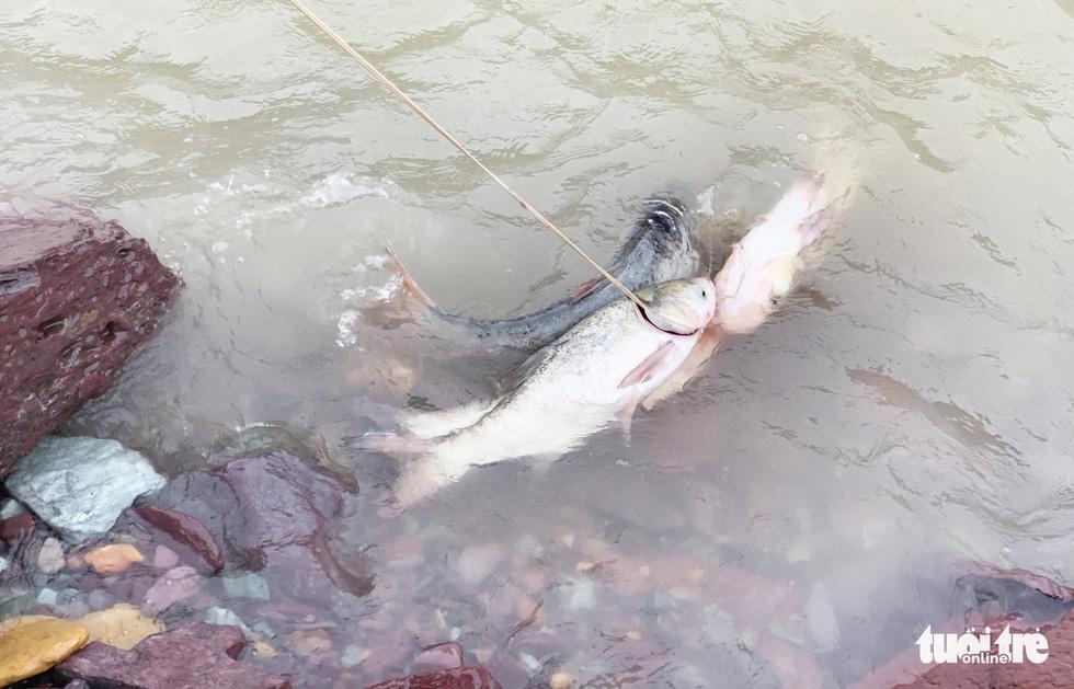 Liều mình săn cá 'khủng' dưới chân hồ Kẻ Gỗ - Ảnh 9.