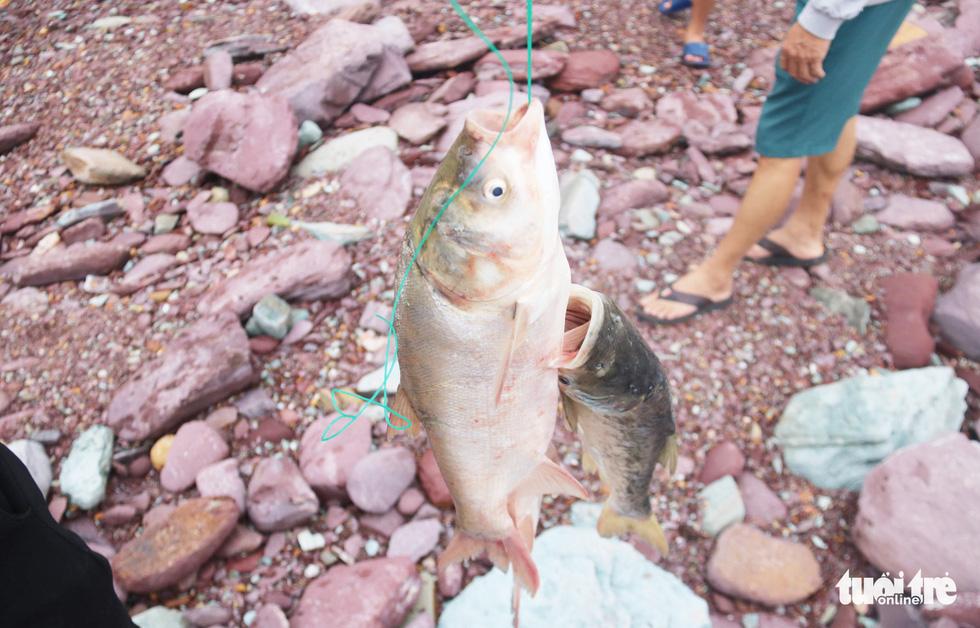 Liều mình săn cá 'khủng' dưới chân hồ Kẻ Gỗ - Ảnh 12.