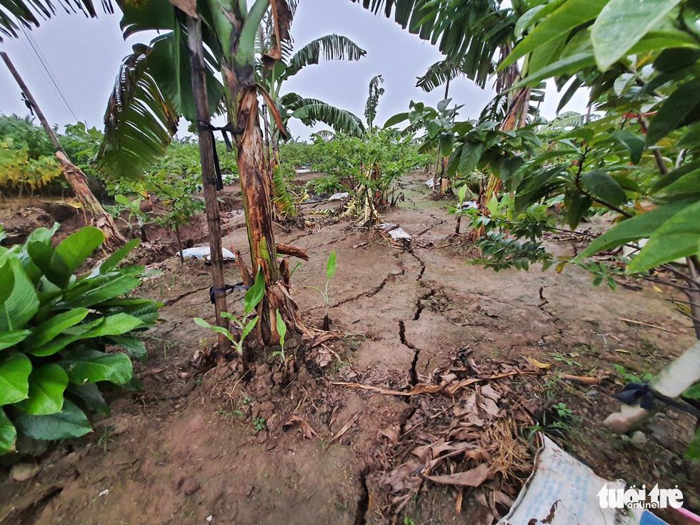 Hố tử thần rộng cả trăm mét vuông, nuốt chửng nhiều cây trồng - Ảnh 5.