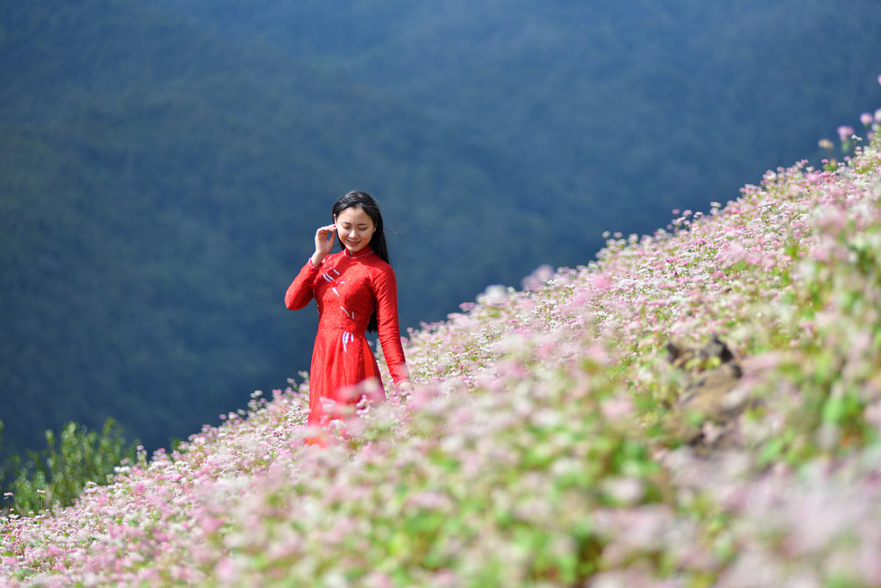 Cao nguyên đá Đồng Văn rực rỡ sắc hoa tam giác mạch - Ảnh 9.