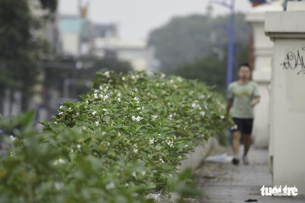 Tiết trời se lạnh, đường phố Sài Gòn rộ sắc hoa - Ảnh 5.