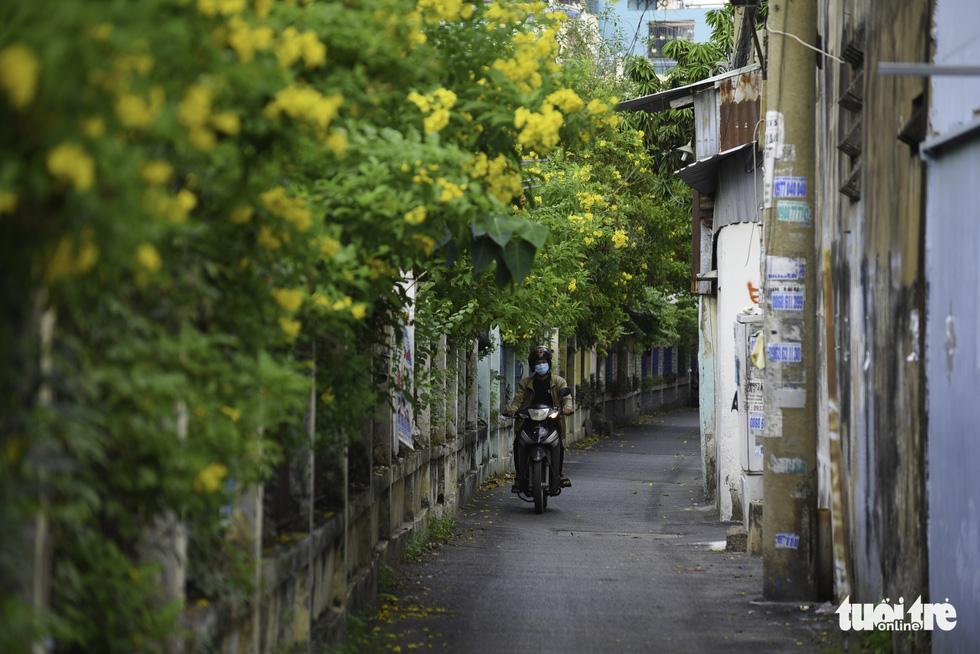 Tiết trời se lạnh, đường phố Sài Gòn rộ sắc hoa - Ảnh 6.