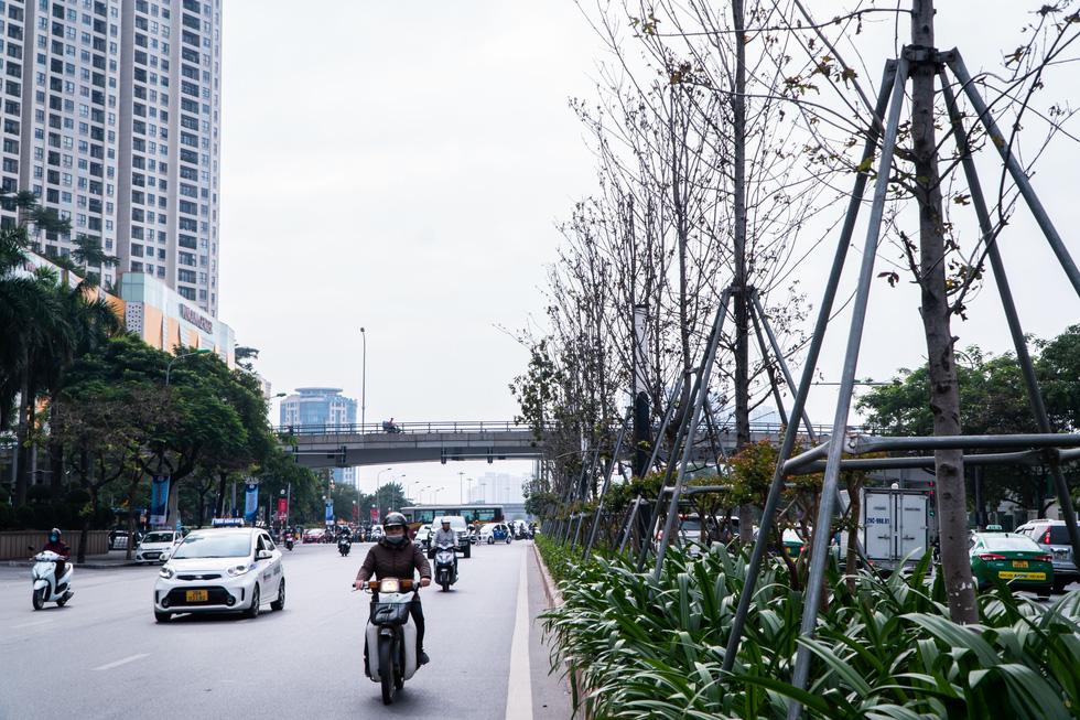 Hàng cây phong lá đỏ chết khô ở tuyến đường được kỳ vọng lãng mạn nhất Hà Nội - Ảnh 8.