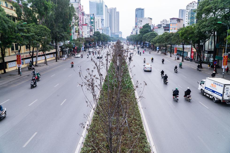 Hàng cây phong lá đỏ chết khô ở tuyến đường được kỳ vọng lãng mạn nhất Hà Nội - Ảnh 1.