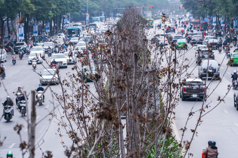 Hàng cây phong lá đỏ chết khô ở tuyến đường được kỳ vọng lãng mạn nhất Hà Nội - Ảnh 5.