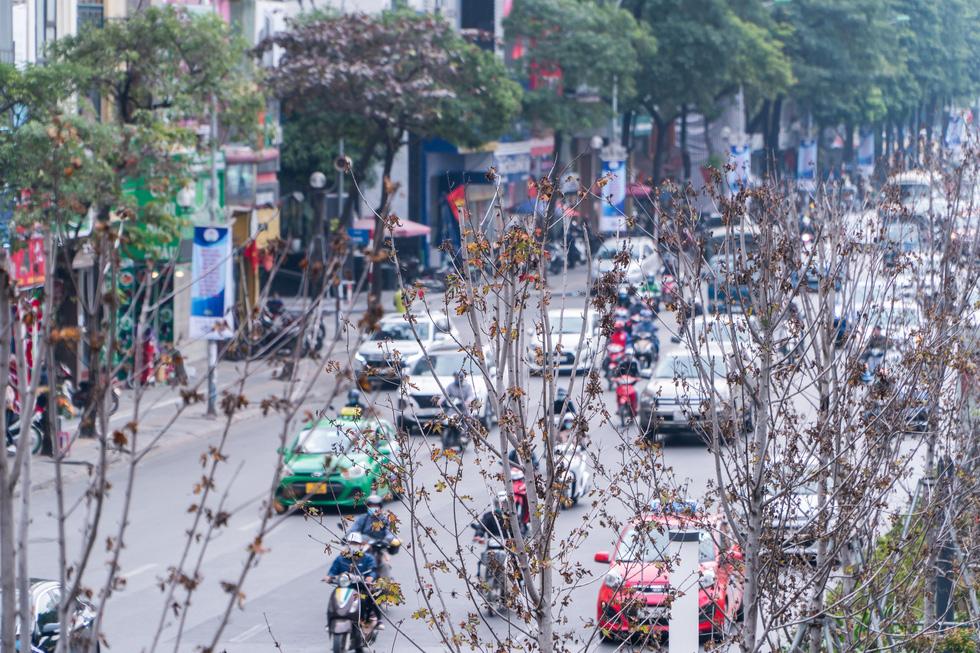 Hàng cây phong lá đỏ chết khô ở tuyến đường được kỳ vọng lãng mạn nhất Hà Nội - Ảnh 3.