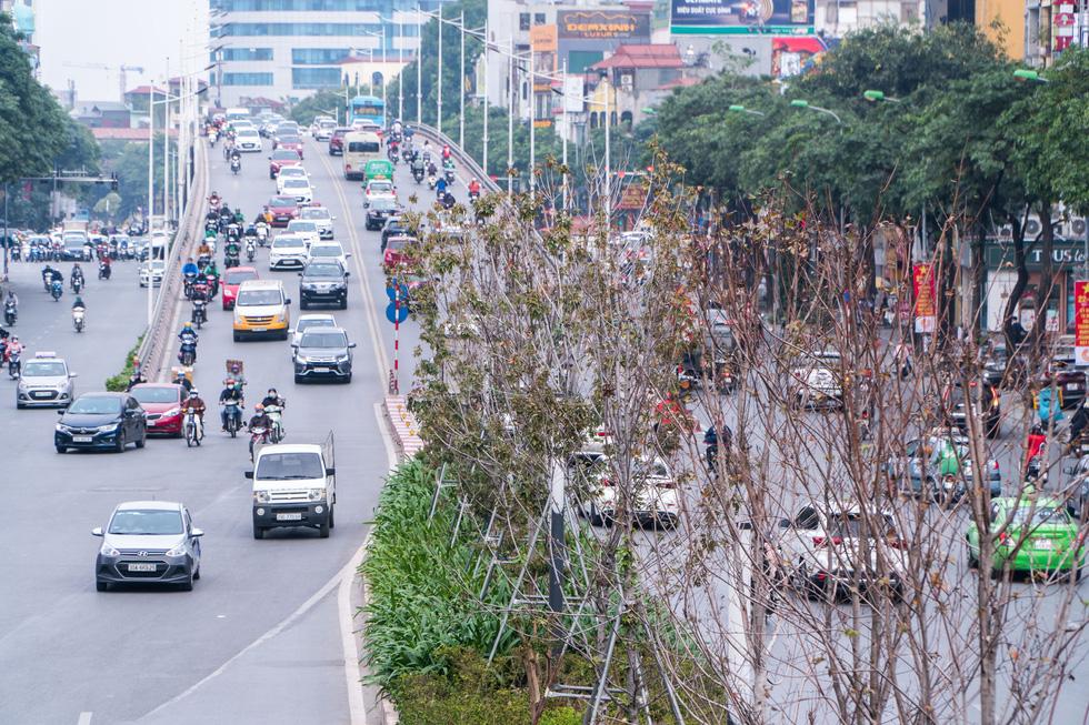 Hàng cây phong lá đỏ chết khô ở tuyến đường được kỳ vọng lãng mạn nhất Hà Nội - Ảnh 2.